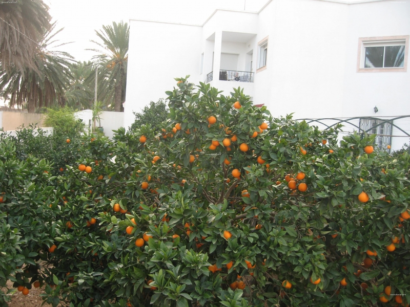 Annonce sur Affariat Tunisie pour: location d'un rez de chaussé d'un villa