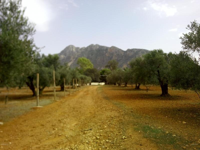Annonce sur Affariat Tunisie pour: Terrain nu à Mornag Jebal Rsas