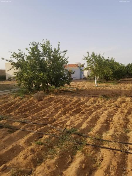 Annonce sur Affariat Tunisie pour: ferme a vendre
