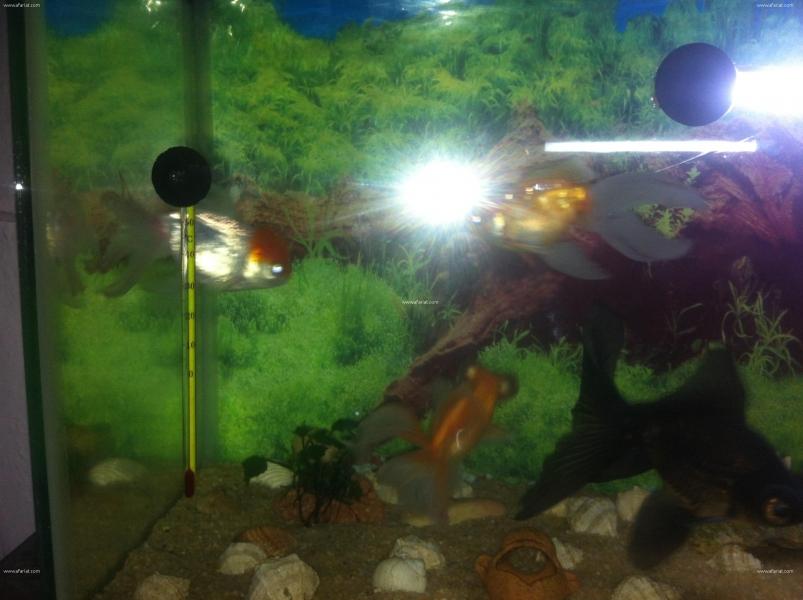 Annonce sur Affariat Tunisie pour: Aquarium & poissons